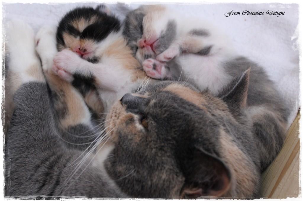 Nele und ihre Kitten